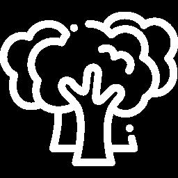 Protección forestal